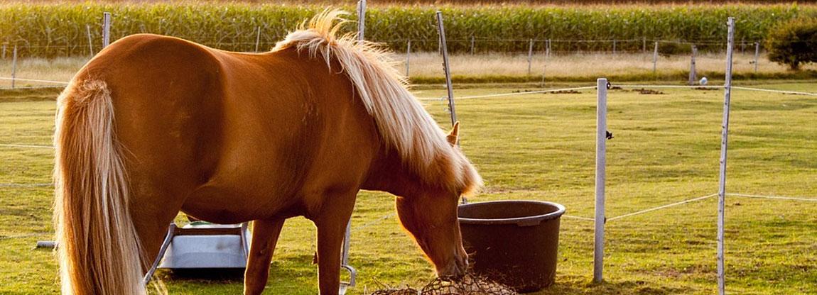 Horse & Specialty Properties